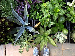 Juana dato: Dam Garden