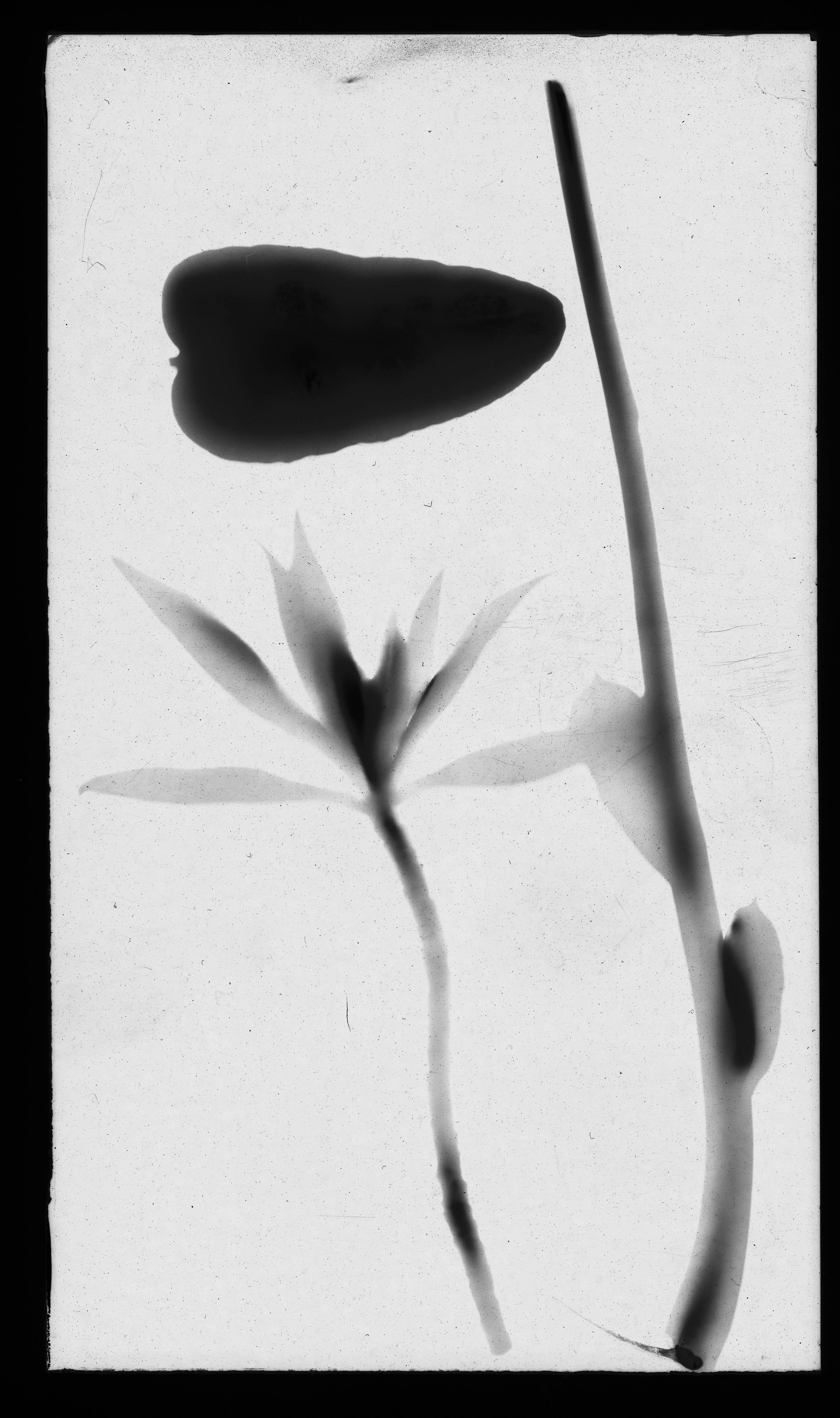 Exposición de fotografía Taller Mankasen en espacio IF Blanco Recoleta.