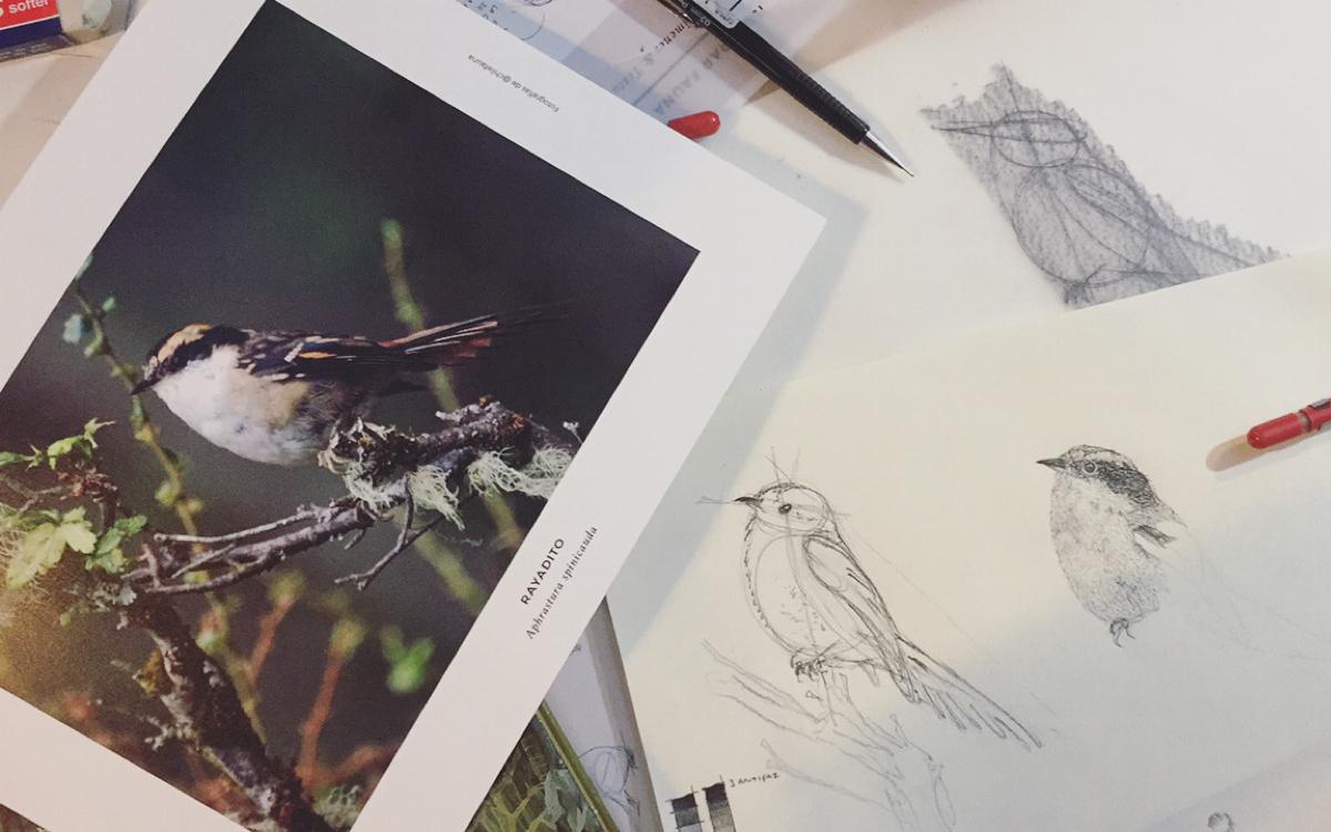 Ilustración & naturaleza: Workshops  por Antonia Reyes en Líbrería Qué Leo