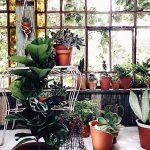 Juana pregunta a Meena y Ceci de compañía botánica