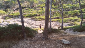 Bajando las expectativas en Mallorca