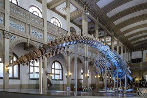 Museo Nacional De Historia Natural: Una Mezcla Perfecta Entre Patrimonio, Ciencia Y Un Excelente Panorama Familiar